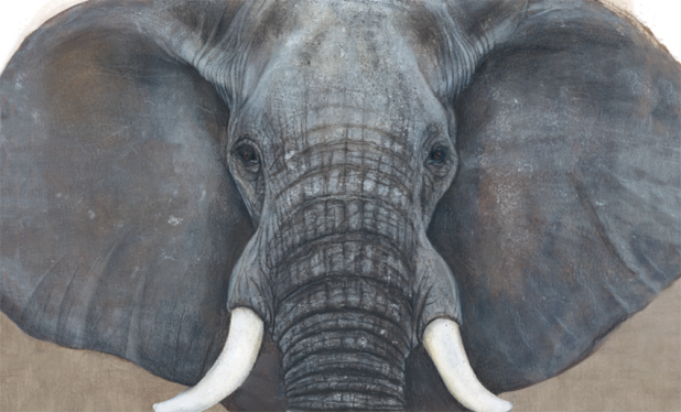 L'éléphant jenni desmond